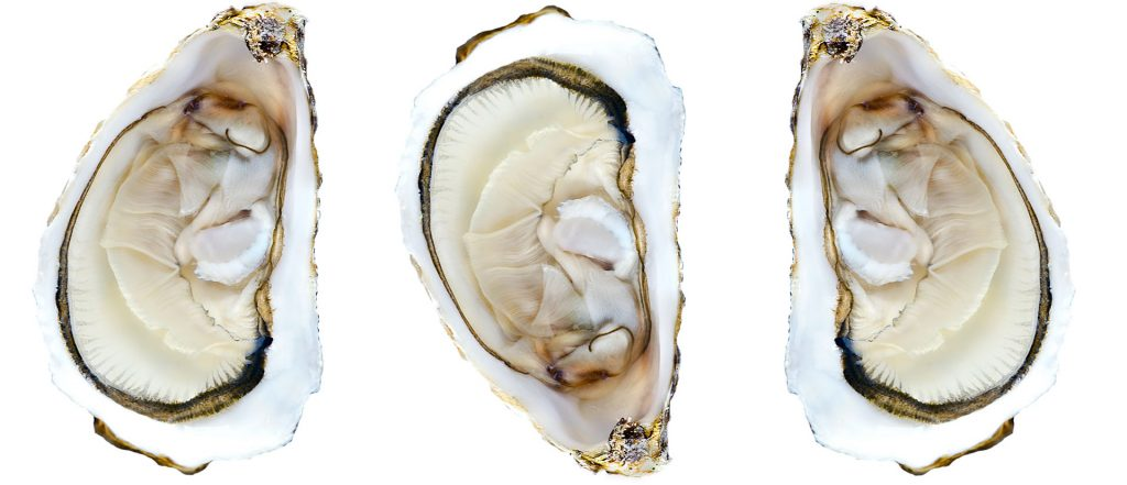 Oyster-web 2